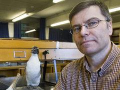 Новозеландский ученый создаст дезодорант для птиц киви