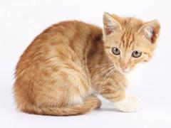 Британец попросил полицию спасти его от кота