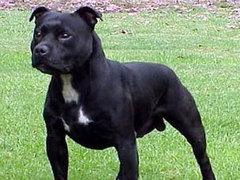 Британские ветеринары превратили пса-гермафродита в суку