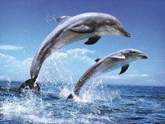 Януковичу предложили предоставить гражданство дельфинам
