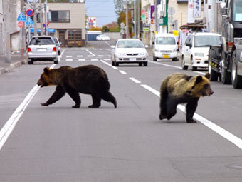 Ранения одного из них оказались тяжелыми - медведь глубоко разодрал.