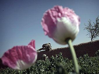 Маковое поле в Афганистане. Фото ©AFP