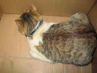 Кошка-наркокурьер. Фото с сайта татарстанского управления Федеральной службы исполнения наказаний