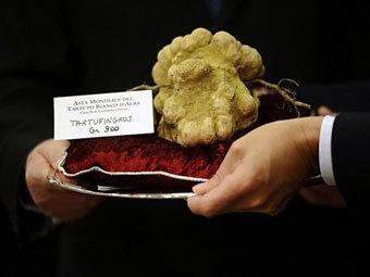 Ушедший с аукциона белый трюфель. Фото ©AFP