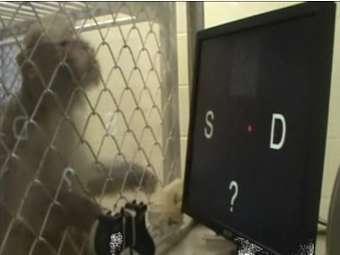 Кадр из видеозаписи исследования