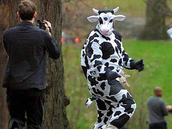 Американец в костюме коровы украл из супермаркета 98 литров молока