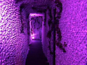 В Лондоне открылся психоделический магазин по мотивам Child of Eden