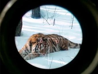 Кадр из рекламного ролика Photoshooting для WWF. Изображение с сервиса YouTube