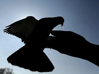 ЛентаГородские голуби научились быстро...