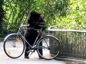 Американец врезался на велосипеде в медведя по дороге на работу Picture