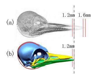 Биологи объяснили неуязвимость дятлов для черепно-мозговых травм