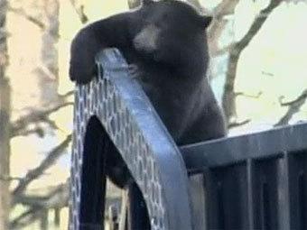 Медведь в мусоровозе. Кадр телеканала Sky News