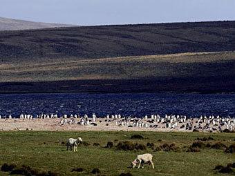 Фолклендские острова. Фото ©AFP