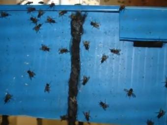 Ловушка для мух. Кадр из видеопрезентации IFAS