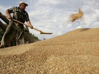 Российское зерно. Фото ©AFP