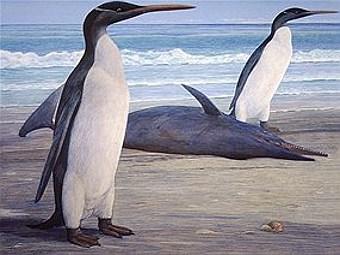 Предполагаемый внешний вид древних пингвинов. Иллюстрация Chris Gaskin/Geology Museum, University of Otago