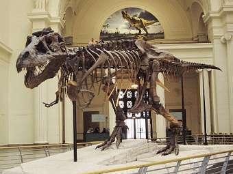 Скелет Tyrannosaurus rex из Филдовского музея естественной истории в Чикаго. Фото пользователя Michael Gray с сайта wikipedia.org