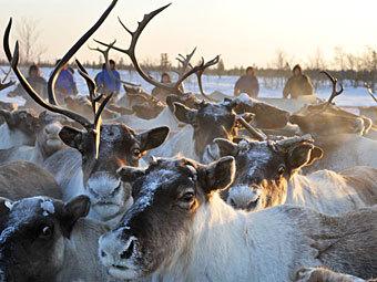 Фото РИА Новости, Сергей Русанов