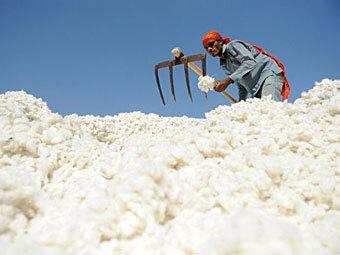 Производство хлопка в Индии. Фото ©AFP