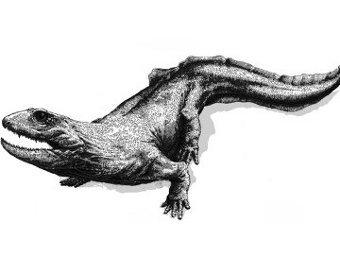 Древняя примитивная амфибия. Фото PNAS