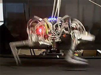 """Гепард"". Кадр из видео на сайте darpa.mil"