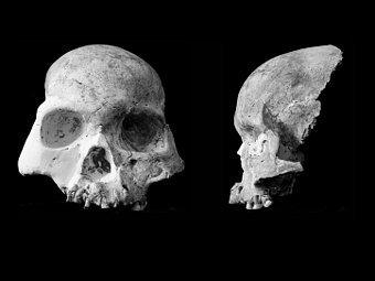 Череп человека из пещеры Благородного Оленя. Фото из статьи авторов..