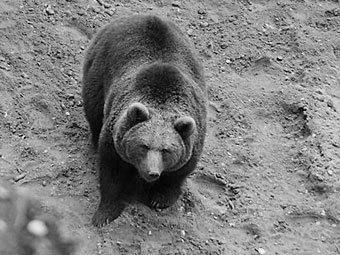 http://img.lenta.ru/news/2012/04/25/bear/picture.jpg
