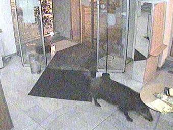 Кадр с камер видеонаблюдения банка в Бруке-ан-дер-Лайта