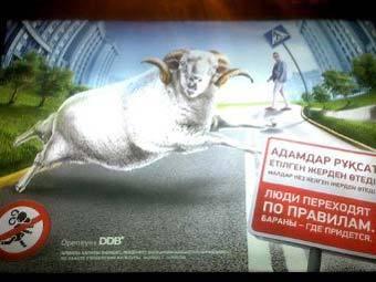 """Плакат про """"пешеходов-баранов"""". Фото управления культуры г. Алма-Аты"""