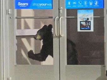 http://img.lenta.ru/news/2012/07/23/bear/picture.jpg