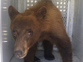 http://img.lenta.ru/news/2012/08/12/bears/picture.jpg