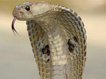 http://img.lenta.ru/news/2012/08/23/snake/picture.jpg