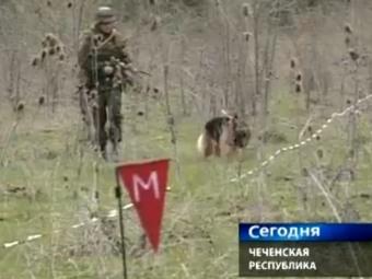 Разминированием Чечни займутся частники