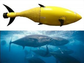 Прототип робота-тунца и настоящие тунцы. Фото с сайта boston-engineering.com