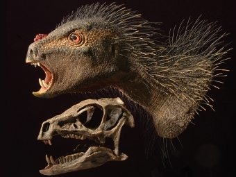 У нового вида динозавров оказались большие клыки