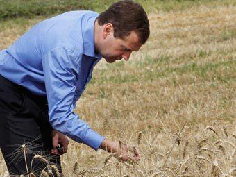 Медведев объявил о начале зерновых интервенций
