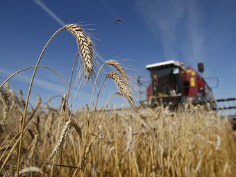 Россия распродаст миллион тонн зерна из госрезервов