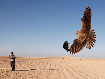Араб тренирует сокола. Фото Reuters