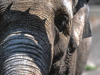 http://img.lenta.ru/news/2012/12/14/elephants/picture.jpg
