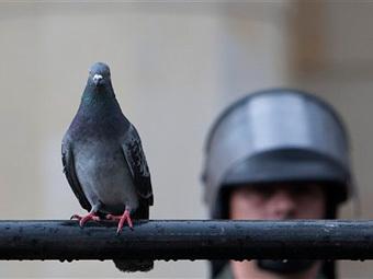 Немка пожаловалась в полицию на странного голубя