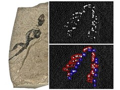 Пятна фосфора на отпечатке являются следами зубов верхней и нижней челюсти (выделены разными цветами) Иллюстрация Edwards et al., Applied Physics A: Materials Science & Processing (2012)