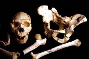Останки Гейдельбергского человека из пещер Атапуэрка. Фото с сайта www.ucm.es
