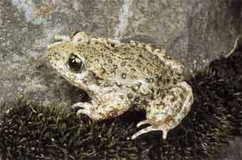 Жабы и лягушки в опасности | О жабах | Статьи о разном | Водный ...