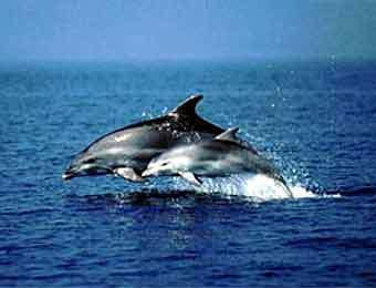 Происхождение дельфинов для многих - это загадка, однако мы постараемся...