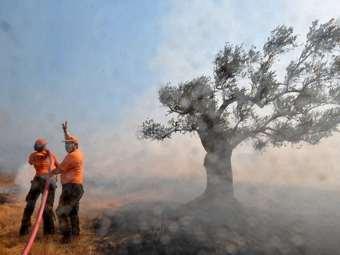 Большинство пожаров около Афин потушены